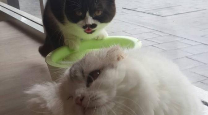 猫カフェへいってみた