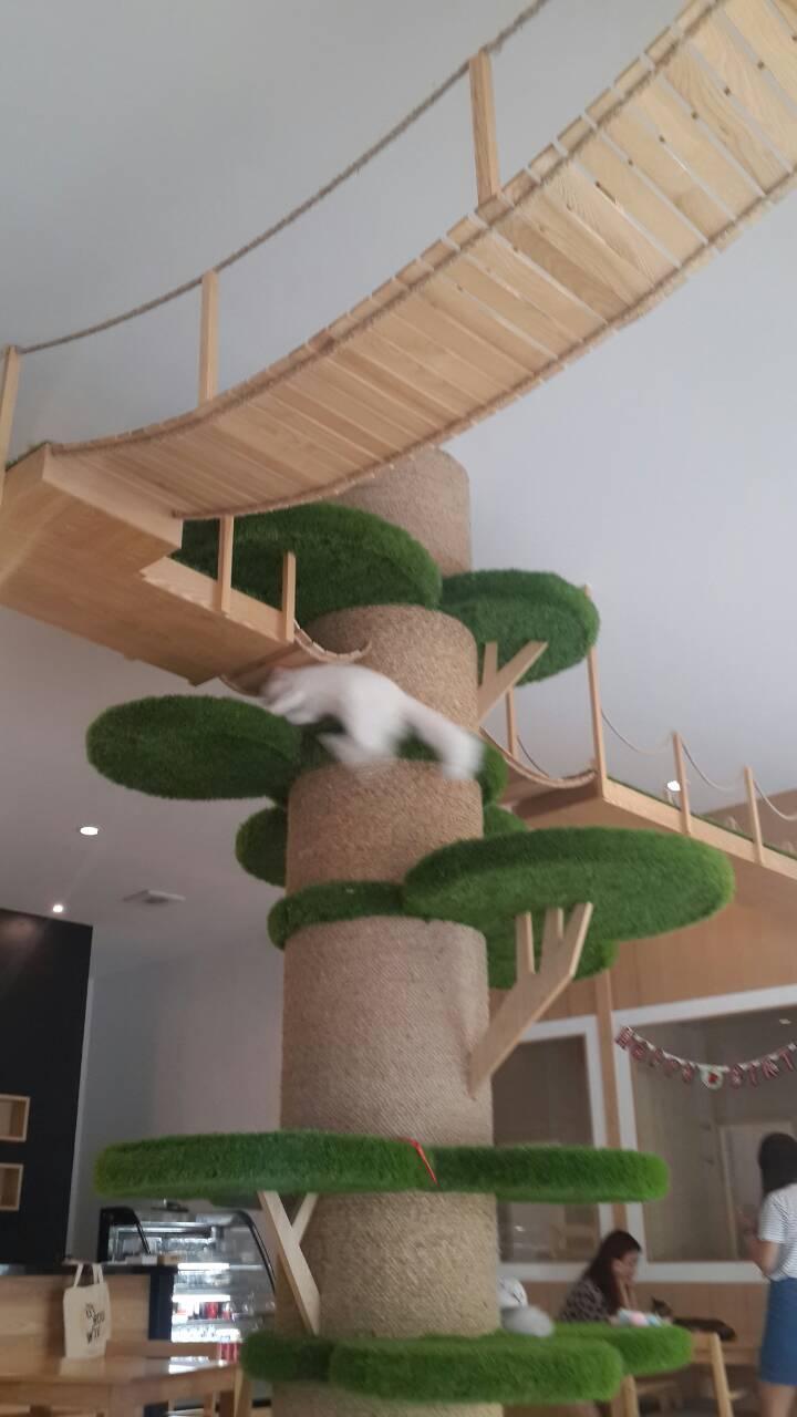 パタヤの子猫カフェ